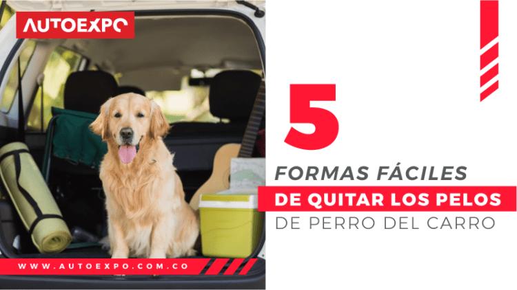 5 formas fáciles de quitar los pelos de perro del carro Autoexpo Concesionario