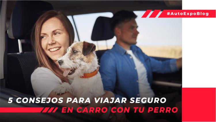 5 consejos para viajar seguro en carro con tu perro Autoexpo Concesionario